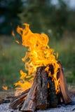 Combustione del fuoco sulla via Salsicce di Francoforte del barbecue fotografia stock libera da diritti
