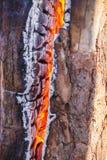 Combustione della legna da ardere in una fine del fuoco su carboni fotografie stock libere da diritti