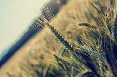 Comcept de la agricultura Imagen de archivo libre de regalías
