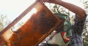Comcept de la agricultura Encima del retrato del viejo apicultor en el velo del sombrero que examina y que sostiene el panal en e almacen de metraje de vídeo