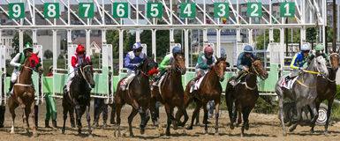 Começo da corrida de cavalos Imagens de Stock