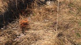 Começo do homem um fogo na natureza vídeos de arquivo