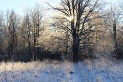 Começo do inverno foto de stock royalty free