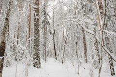 Começo do inverno Imagens de Stock Royalty Free