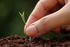 Começos crescimento-novos da planta Fotos de Stock