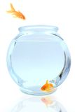 Come on in!. Goldfish jumping into bowl Stock Photos