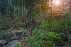 We come autumn in the forest, Monchique. Stock Images