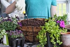 Come piantare un canestro d'attaccatura dei fiori Immagine Stock
