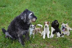 Come on, play with us. Group of dogs in the meadow stock image