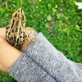 Comedor de rãs do leopardo do bebê fotografia de stock