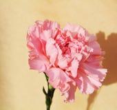 Comemorando a guloseima, símbolo Fotografia de Stock Royalty Free