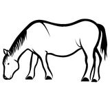 Comendo o cavalo Imagem de Stock Royalty Free