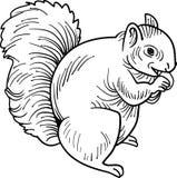 Comendo o esquilo ilustração do vetor