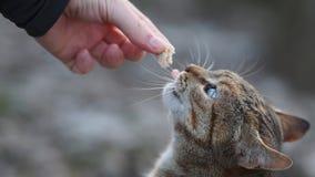 Comendo o gato imagem de stock royalty free