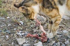 Comendo os gatos dos gatos que comem a carne Foto de Stock