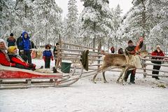 Começo da raça nos pequenos trenós da rena Fotografia de Stock