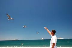 Comer das gaivota Fotos de Stock