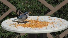Comer de Jay azul filme