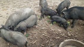 Comer do animal imagem de stock royalty free