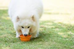 Comer do cão Fotos de Stock Royalty Free