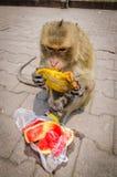 Comer do macaco. Imagem de Stock Royalty Free