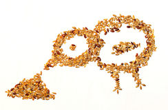 Comer do pássaro da semente Imagem de Stock