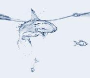 Comer do tubarão da água Foto de Stock Royalty Free
