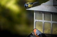 Comer dos pássaros Fotografia de Stock