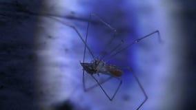 Comer novo da aranha da adega vídeos de arquivo
