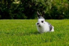 Comer pequeno do coelho Imagens de Stock