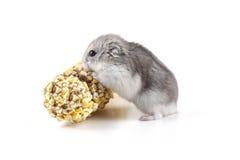 Comer pequeno do hamster Fotografia de Stock