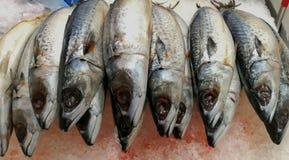 Comer, pesca, Sérvia, captura dos peixes, mercado foto de stock royalty free