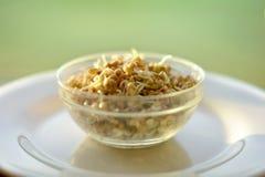 Comer saudável O trigo mourisco verde brota na bacia de vidro em p branco imagens de stock royalty free