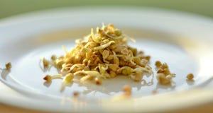 Comer saudável O trigo mourisco verde brota na placa branca Foto de Stock