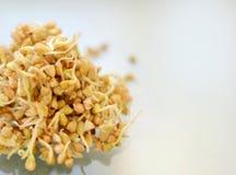 Comer saudável Trigo mourisco brotado isolado no branco foto de stock royalty free