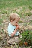 Comer Strawberrie da criança imagens de stock royalty free
