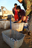 Comerciante de la pesca Imagenes de archivo