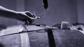Comerciante de vinhos que toma a amostra de vinho tinto na adega Testes do vinho vídeos de arquivo