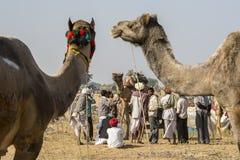 Comerciantes del camello imágenes de archivo libres de regalías
