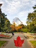 Maple Leaf. So comes autumn in the city, painting the leaves of trees Royalty Free Stock Photo