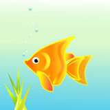Comet gold fish Stock Photos