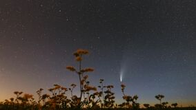 Comet Neowise C 2020 F3 In Night Starry Sky Above Flowering Buckwheat. Night Stars In July Month. Comet At A Distance Of
