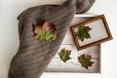 Still life composition of dry leaves on white box royalty free stock photo