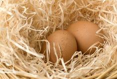 Comfort nest Stock Photography