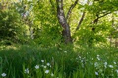 Comfortabel afgezonderd hoekje van het de zomerbos in het ochtendzonlicht stock fotografie