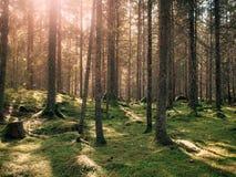 Comfortabel bemost groen bos royalty-vrije stock afbeelding