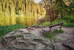 Comfortabele bank in het bos dichtbij het meer met wortels van bomen onder uw voeten Een schilderachtige te ontspannen plaats Royalty-vrije Stock Afbeelding