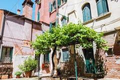 Comfortabele binnenplaats met oude druivenboom in Venetië stock fotografie