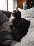 Comfortabele kat Stock Afbeeldingen