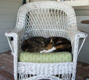 Comfortabele Katten Stock Afbeelding